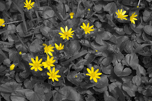 Flowers in Black and Yellow