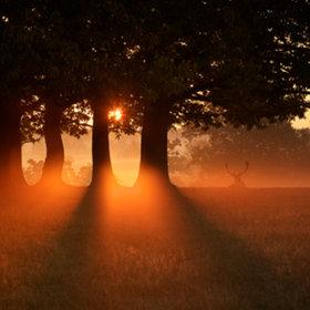 morning mist by Mark Bridger (bridgephotography) on 500px.com