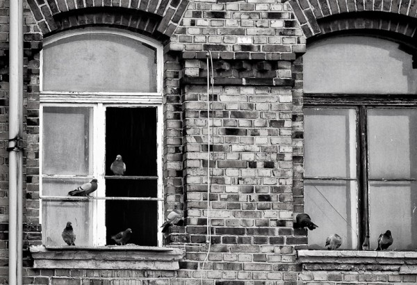 Neue Bewohner an verlassenen Orten - Dresden Friedrichstadt
